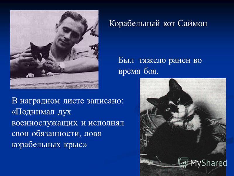 Корабельный кот Саймон Был тяжело ранен во время боя. В наградном листе записано: «Поднимал дух военнослужащих и исполнял свои обязанности, ловя корабельных крыс»