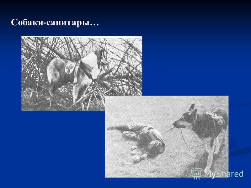 Собаки-санитары…