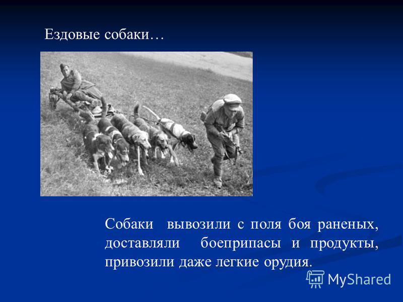 Собаки вывозили с поля боя раненых, доставляли боеприпасы и продукты, привозили даже легкие орудия. Ездовые собаки…