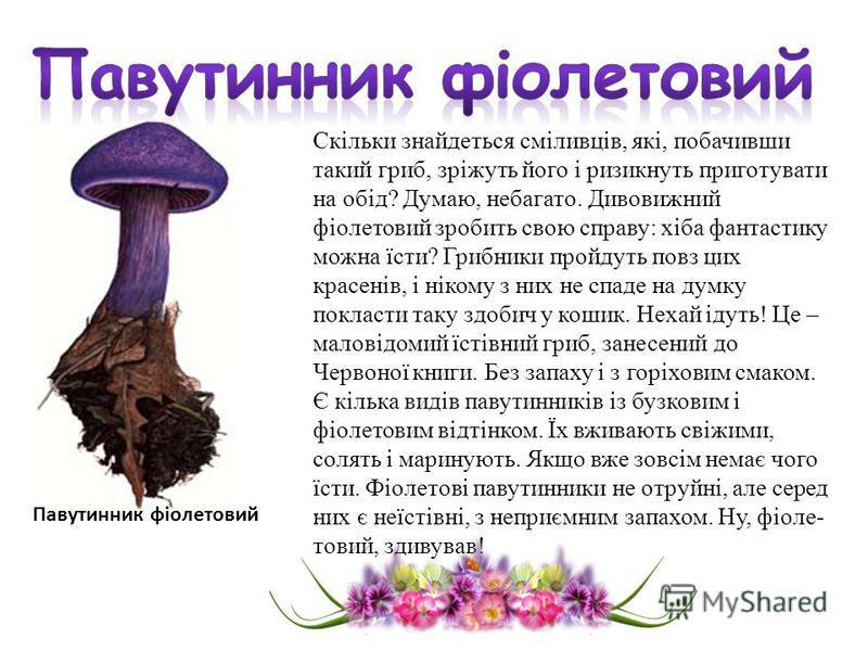 Скільки знайдеться сміливців, які, побачивши такий гриб, зріжуть його і ризикнуть приготувати на обід? Думаю, небагато. Дивовижний фіолетовий зробить свою справу: хіба фантастику можна їсти? Грибники пройдуть повз цих красенів, і нікому з них не спад