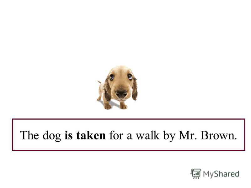 The dog is taken for a walk by Mr. Brown.