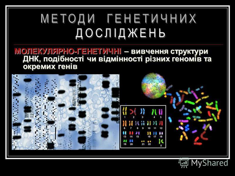 ДЕРМАТОГЛІФІЧНИЙ – вивчення відбитків долонь з метою з'ясування спадкових хромосомних паталогій