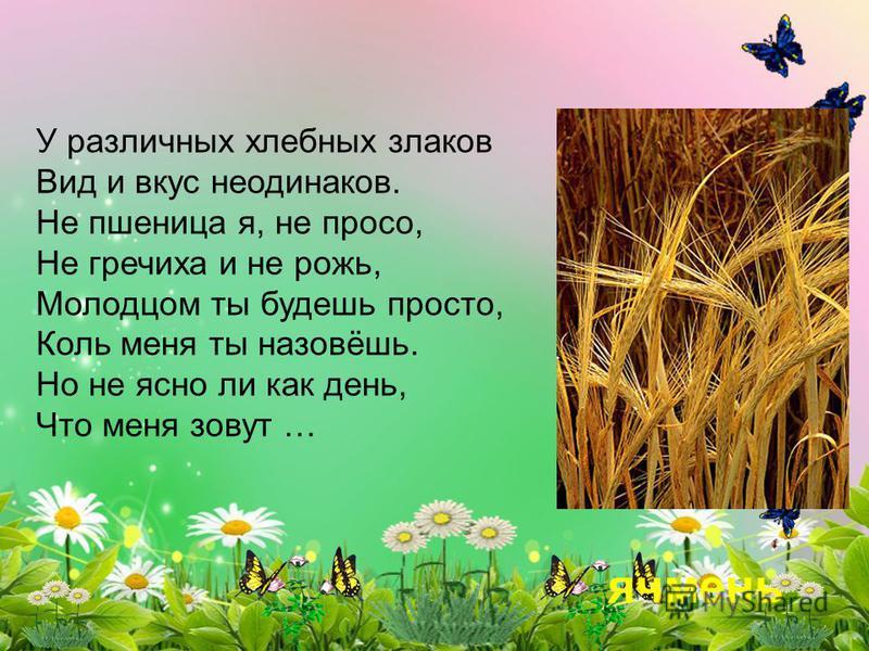 У различных хлебных злаков Вид и вкус неодинаков. Не пшеница я, не просо, Не гречиха и не рожь, Молодцом ты будешь просто, Коль меня ты назовёшь. Но не ясно ли как день, Что меня зовут … ячмень