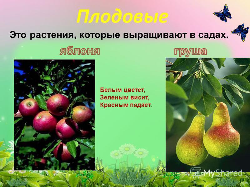 Плодовые Это растения, которые выращивают в садах. Белым цветет, Зеленым висит, Красным падает.