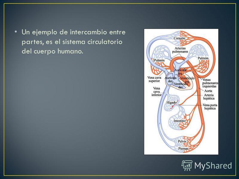 Un ejemplo de intercambio entre partes, es el sistema circulatorio del cuerpo humano.