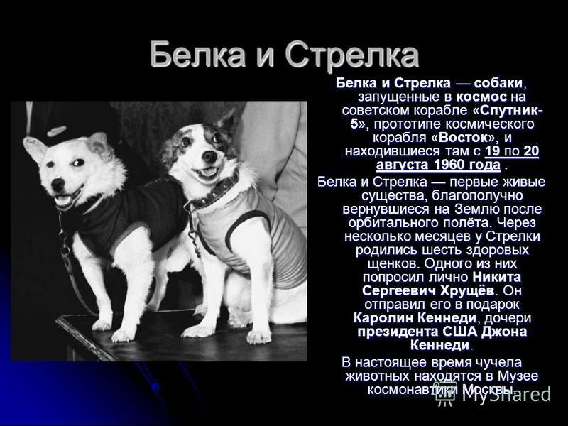 Белка и Стрелка Белка и Стрелка собаки, запущенные в космос на советском корабле «Спутник- 5», прототипе космического корабля «Восток», и находившиеся там с 19 по 20 августа 1960 года. Белка и Стрелка первые живые существа, благополучно вернувшиеся н