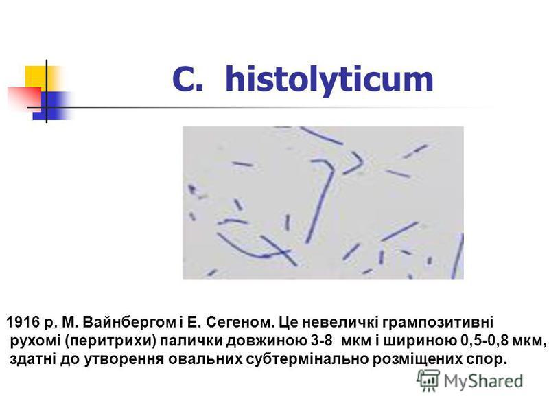 C. histolyticum Мікроорганізми були вперше виділені у 1916 р. М. Вайнбергом і Е. Сегеном. Це невеличкі грампозитивні рухомі (перитрихи) палички довжиною 3-8 мкм і шириною 0,5-0,8 мкм, здатні до утворення овальних субтермінально розміщених спор.