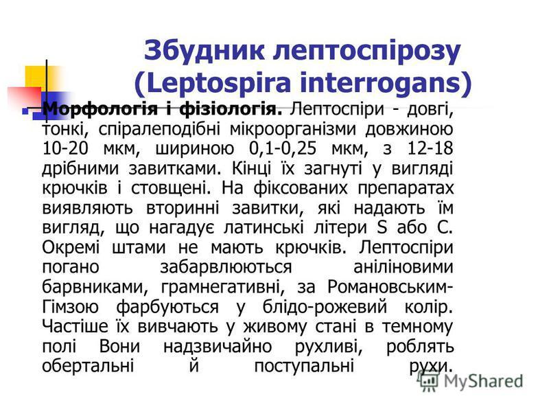 Збудник лептоспірозу (Leptospira interrogans) Морфологія і фізіологія. Лептоспіри - довгі, тонкі, спіралеподібні мікроорганізми довжиною 10-20 мкм, шириною 0,1-0,25 мкм, з 12-18 дрібними завитками. Кінці їх загнуті у вигляді крючків і стовщені. На фі