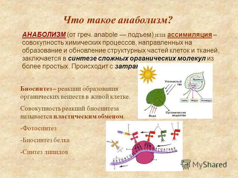 5 Что такое анаболизм? АНАБОЛИЗМ (от греч. anabole подъем) или ассимиляция – совокупность химических процессов, направленных на образование и обновление структурных частей клеток и тканей, заключается в синтезе сложных органических молекул из более п