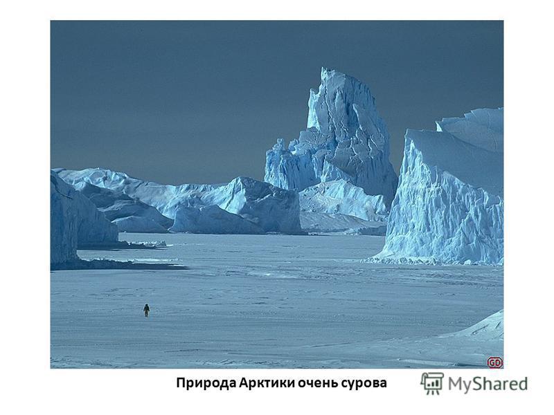 Природа Арктики очень сурова