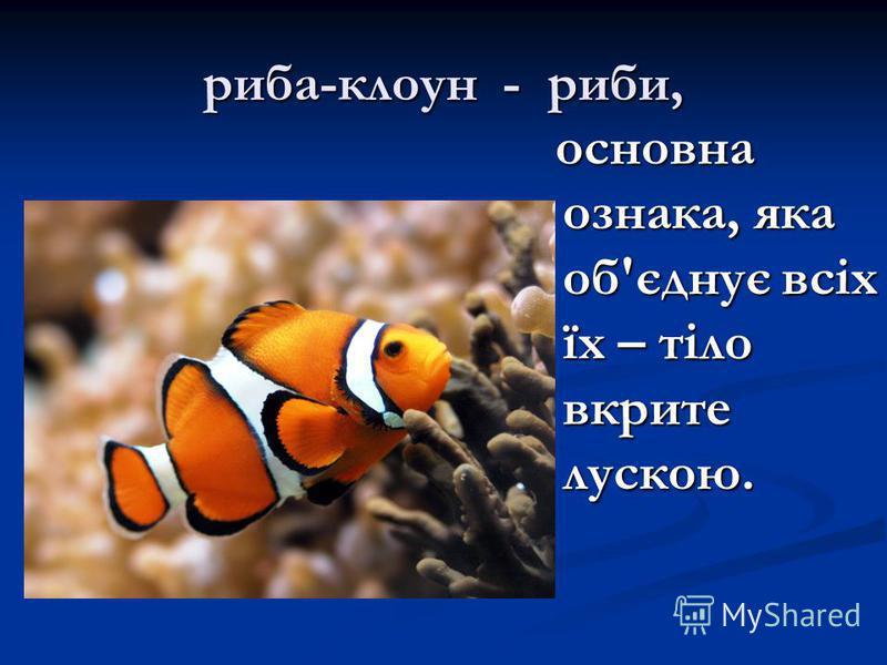 риба-клоун - риби, основна ознака, яка об'єднує всіх їх – тіло вкрите лускою.