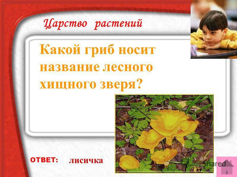 Царство растений Какую траву узнает даже слепой? ОТВЕТ: крапиву