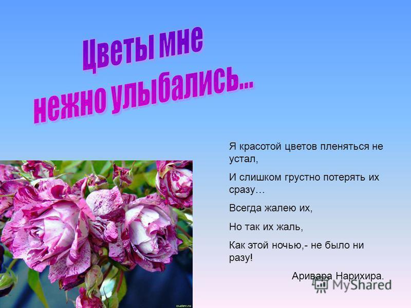 Я красотой цветов пленяться не устал, И слишком грустно потерять их сразу… Всегда жалею их, Но так их жаль, Как этой ночью,- не было ни разу! Аривара Нарихира.