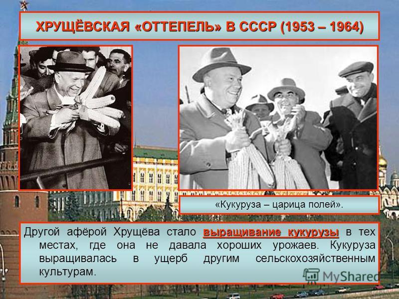 ХРУЩЁВСКАЯ «ОТТЕПЕЛЬ» В СССР (1953 – 1964) выращивание кукурузы Другой афёрой Хрущёва стало выращивание кукурузы в тех местах, где она не давала хороших урожаев. Кукуруза выращивалась в ущерб другим сельскохозяйственным культурам. «Кукуруза – царица