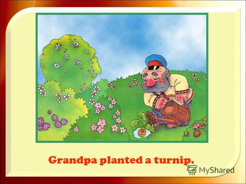 Grandpa planted a turnip.