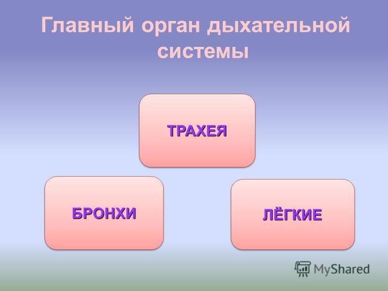 Главный орган дыхательной системы ЛЁГКИЕ БРОНХИ ТРАХЕЯ