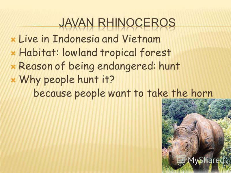Live in Indonesia and Vietnam Habitat: lowland tropical forest Reason of being endangered: hunt Why people hunt it? because people want to take the horn