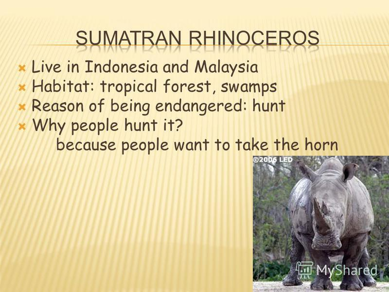 Live in Indonesia and Malaysia Habitat: tropical forest, swamps Reason of being endangered: hunt Why people hunt it? because people want to take the horn