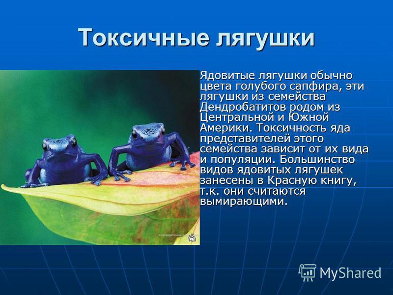 Токсичные лягушки Ядовитые лягушки обычно цвета голубого сапфира, эти лягушки из семейства Дендробатитов родом из Центральной и Южной Америки. Токсичность яда представителей этого семейства зависит от их вида и популяции. Большинство видов ядовитых л