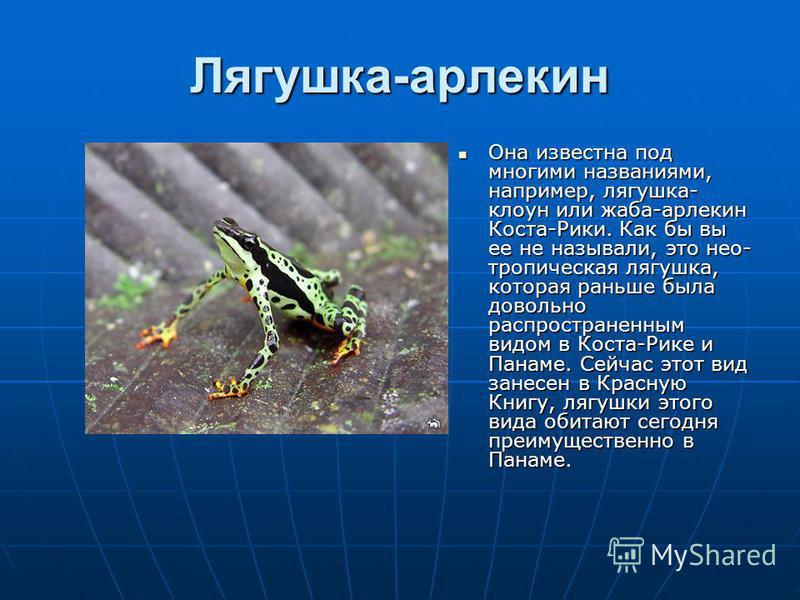 Лягушка-арлекин Она известна под многими названиями, например, лягушка- клоун или жаба-арлекин Коста-Рики. Как бы вы ее не называли, это неотропическая лягушка, которая раньше была довольно распространенным видом в Коста-Рике и Панаме. Сейчас этот ви