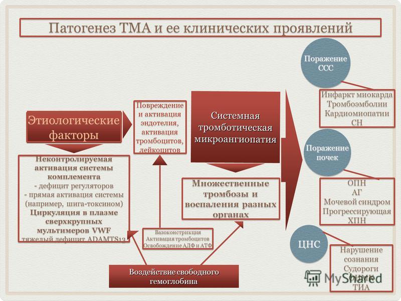 Патогенез ТМА и ее клинических проявлений Этиологические факторы Этиологические факторы Неконтролируемая активация системы комплемента - дефицит регуляторов - прямая активация системы (например, шига-токсином) Циркуляция в плазме сверхкрупных мультим