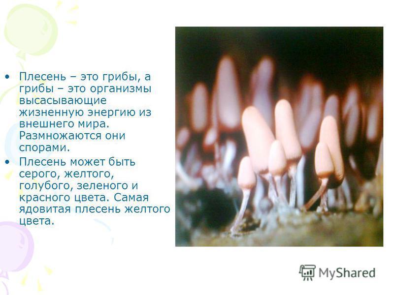 Плесень – это грибы, а грибы – это организмы высасывающие жизненную энергию из внешнего мира. Размножаются они спорами. Плесень может быть серого, желтого, голубого, зеленого и красного цвета. Самая ядовитая плесень желтого цвета.