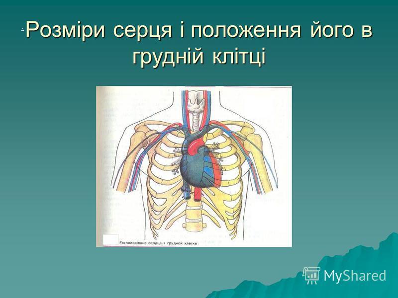 Розміри серця і положення його в грудній клітці.