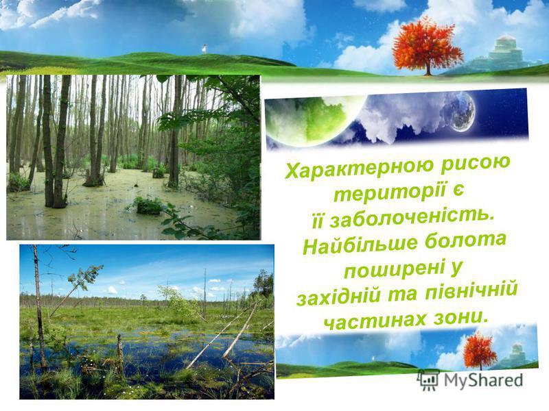 Характерною рисою території є її заболоченість. Найбільше болота поширені у західній та північній частинах зони.