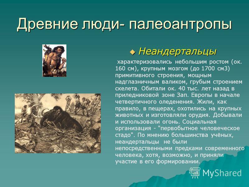 Древние люди- палеоантропы Неандертальцы Неандертальцы характеризовались небольшим ростом (ок. 160 см), крупным мозгом (до 1700 см 3) примитивного строения, мощным надглазничным валиком, грубым строением скелета. Обитали ок. 40 тыс. лет назад в при л