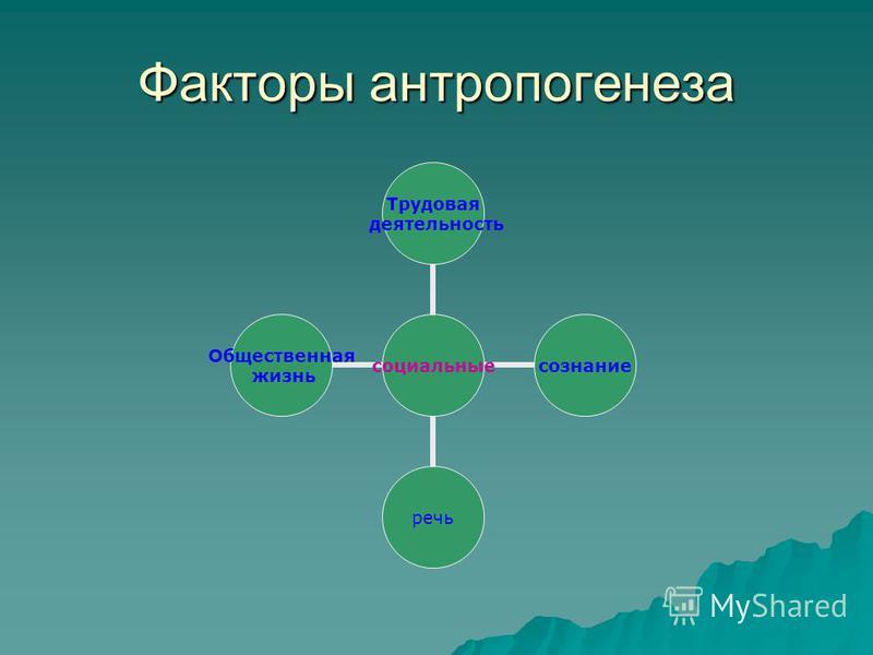 Факторы антропогенеза социальные Трудовая деятельность сознание речь Общественная жизнь
