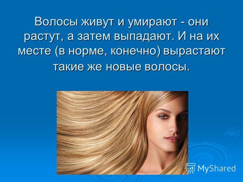 Волосы живут и умирают - они растут, а затем выпадают. И на их месте (в норме, конечно) вырастают такие же новые волосы.