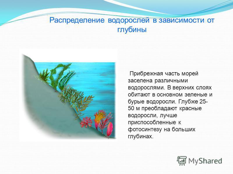 Прибрежная часть морей заселена различными водорослями. В верхних слоях обитают в основном зеленые и бурые водоросли. Глубже 25- 50 м преобладают красные водоросли, лучше приспособленные к фотосинтезу на больших глубинах. Распределение водорослей в з