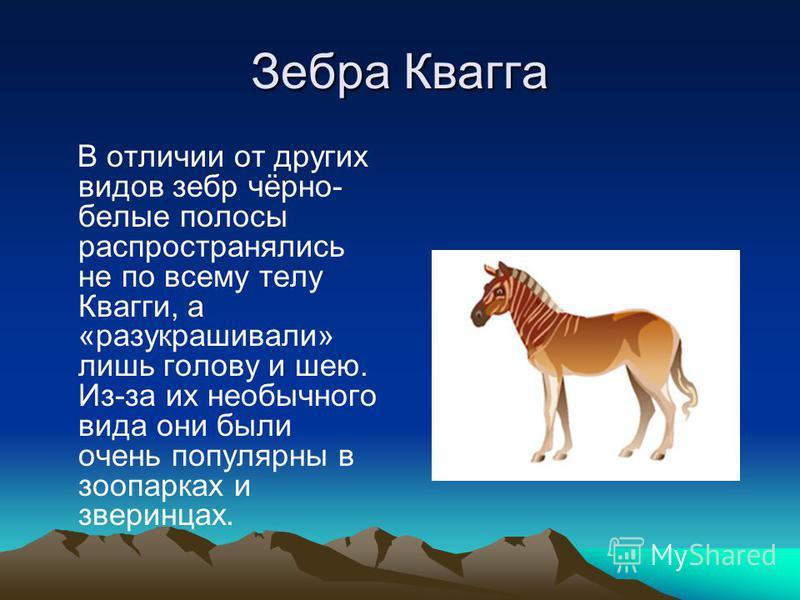 Зебра Квагга В отличии от других видов зебр чёрно- белые полосы распространялись не по всему телу Квагги, а «разукрашивали» лишь голову и шею. Из-за их необычного вида они были очень популярны в зоопарках и зверинцах.