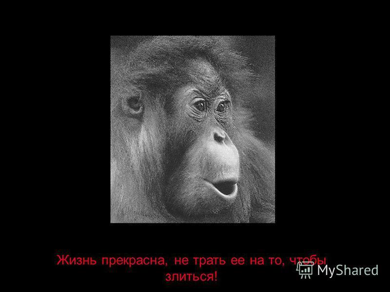 Жизнь прекрасна, не трать ее на то, чтобы злиться!