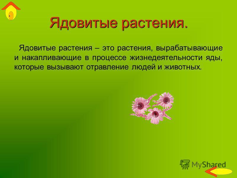 Ядовитые растения. Ядовитые растения – это растения, вырабатывающие и накапливающие в процессе жизнедеятельности яды, которые вызывают отравление людей и животных.