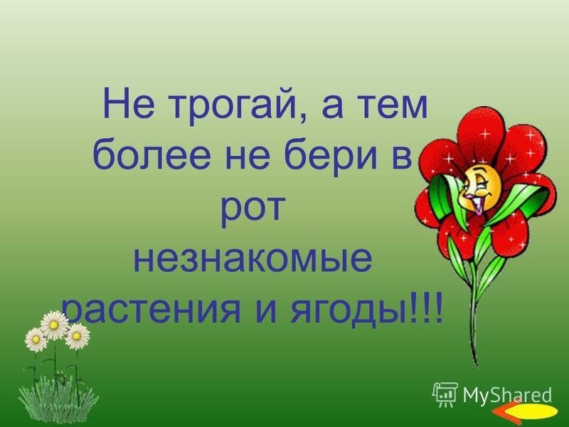 Не трогай, а тем более не бери в рот незнакомые растения и ягоды!!!