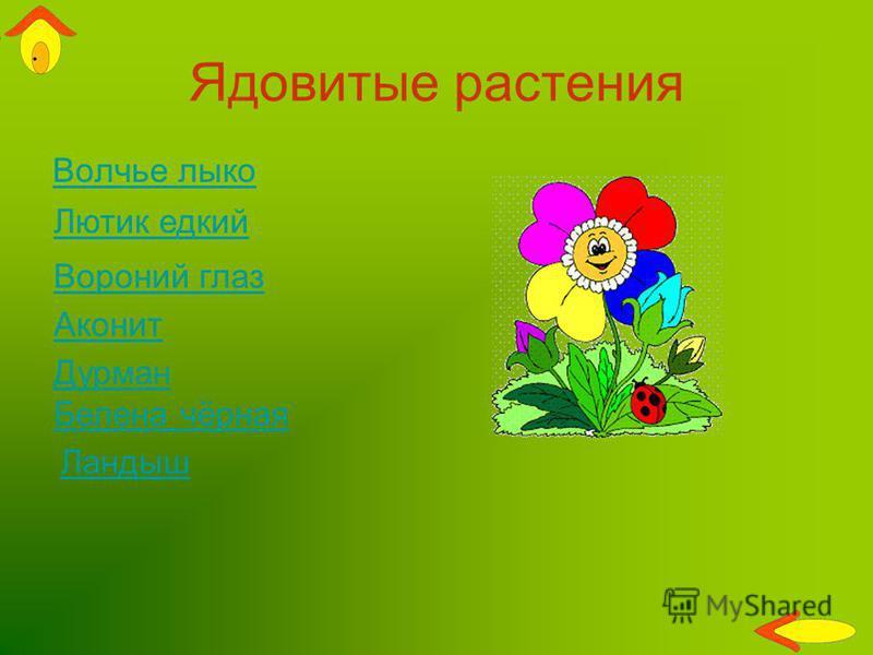 Ядовитые растения Волчье лыко Вороний глаз Лютик едкий Дурман Аконит Ландыш Белена чёрная