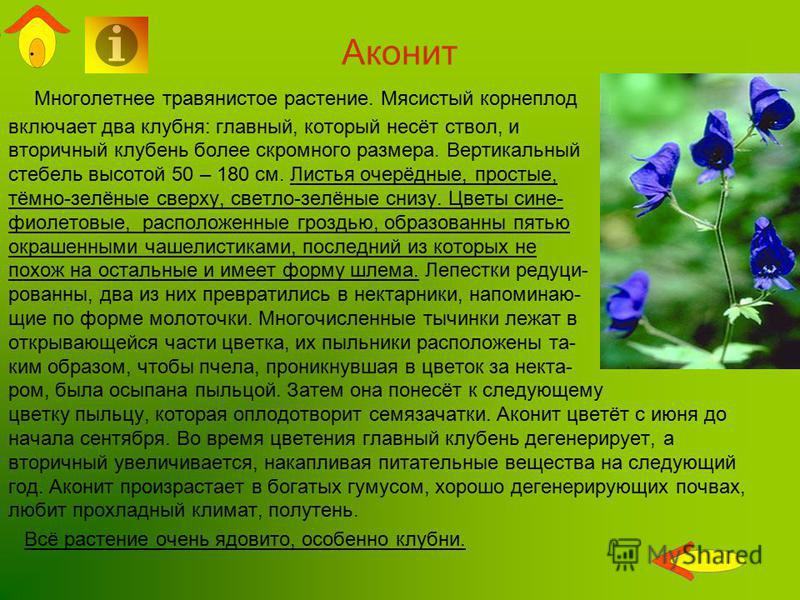Аконит Многолетнее травянистое растение. Мясистый корнеплод включает два клубня: главный, который несёт ствол, и вторичный клубень более скромного размера. Вертикальный стебель высотой 50 – 180 см. Листья очерёдные, простые, тёмно-зелёные сверху, све