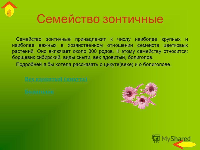 Семейство зонтичные Семейство зонтичные принадлежит к числу наиболее крупных и наиболее важных в хозяйственном отношении семейств цветковых растений. Оно включает около 300 родов. К этому семейству относится: борщевик сибирский, виды сныти, вех ядови
