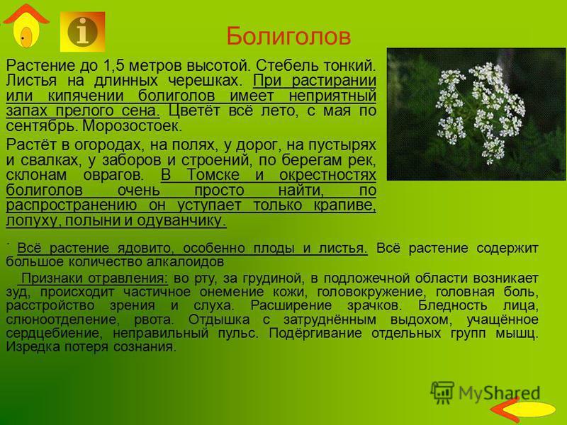 Растение до 1,5 метров высотой. Стебель тонкий. Листья на длинных черешках. При растирании или кипячении болиголов имеет неприятный запах прелого сена. Цветёт всё лето, с мая по сентябрь. Морозостоек. Растёт в огородах, на полях, у дорог, на пустырях