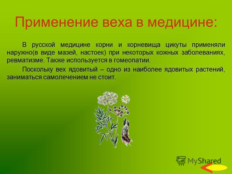 Применение веха в медицине: В русской медицине корни и корневища цикуты применяли наружно(в виде мазей, настоек) при некоторых кожных заболеваниях, ревматизме. Также используется в гомеопатии. Поскольку вех ядовитый – одно из наиболее ядовитых растен