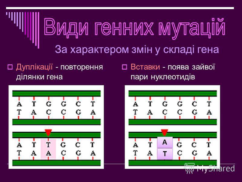 Дуплікації - повторення ділянки гена Вставки - поява зайвої пари нуклеотидів А А Т Т За характером змін у складі гена