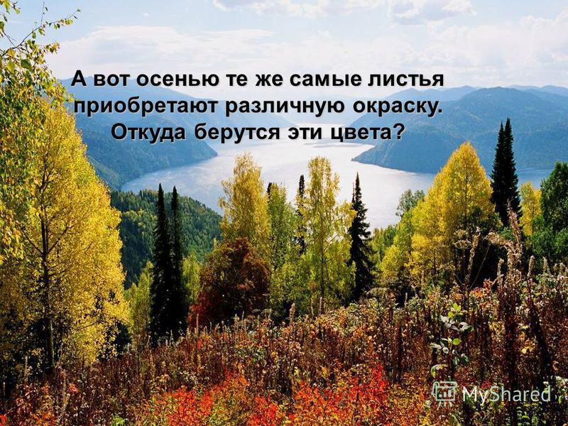 А вот осенью те же самые листья приобретают различную окраску. Откуда берутся эти цвета?