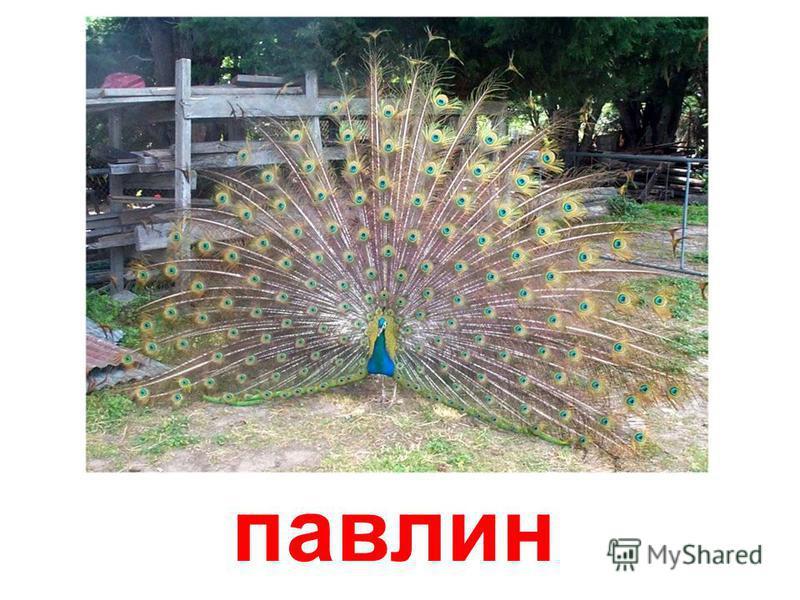 Птицы (часть 3)