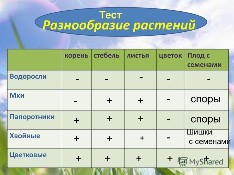 Разнообразие растений корень стебель листья цветок Плод с семенами Водоросли Мхи Папоротники Хвойные Цветковые -- - -- -++ -споры + ++- ++ + - Шишки с семенами +++++ Тест