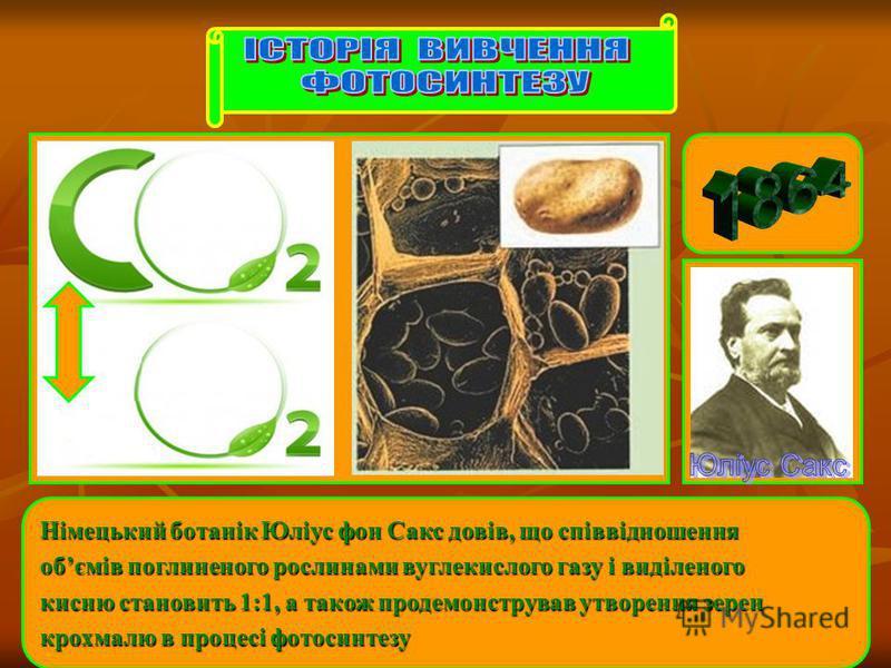 Німецький ботанік Юліус фон Сакс довів, що співвідношення обємів поглиненого рослинами вуглекислого газу і виділеного кисню становить 1:1, а також продемонстрував утворення зерен крохмалю в процесі фотосинтезу