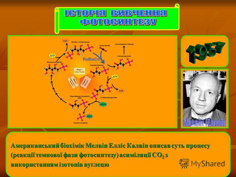 Американський біохімік Мелвін Елліс Калвін описав суть процесу (реакції темнової фази фотосинтезу) асиміляції CO 2 з використанням ізотопів вуглецю