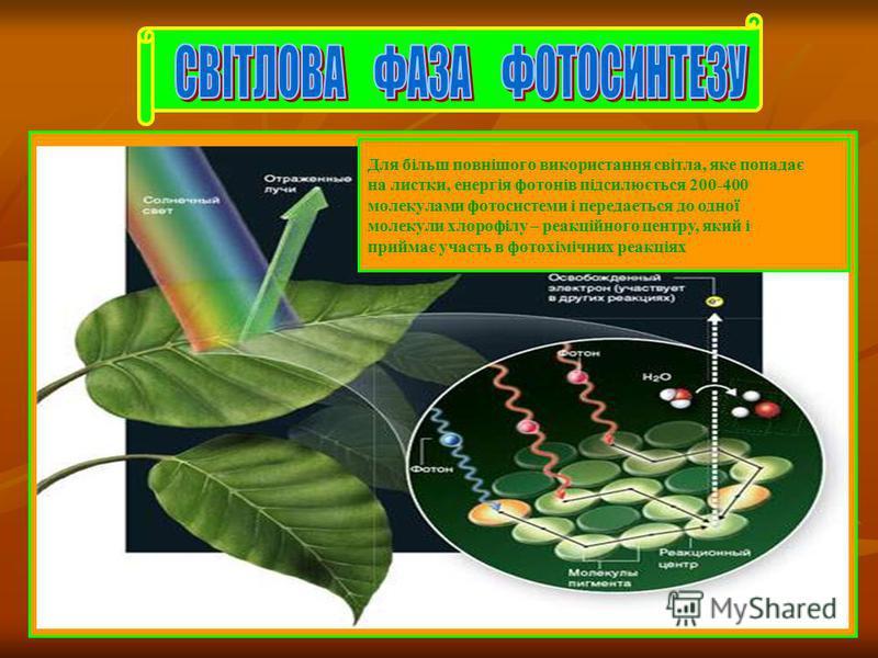 Для більш повнішого використання світла, яке попадає на листки, енергія фотонів підсилюється 200-400 молекулами фотосистеми і передаеться до одної молекули хлорофілу – реакційного центру, який і приймає участь в фотохімічних реакціях