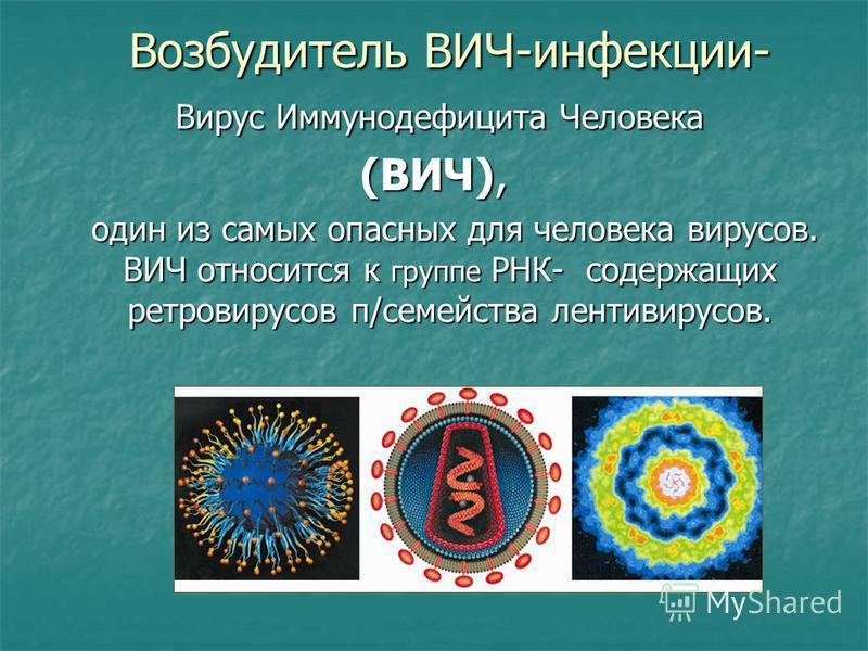 Возбудитель ВИЧ-инфекции- Вирус Иммунодефицита Человека Вирус Иммунодефицита Человека (ВИЧ), один из самых опасных для человека вирусов. ВИЧ относится к группе РНК- содержащих ретровирусов п/семейства лентивирусов. один из самых опасных для человека