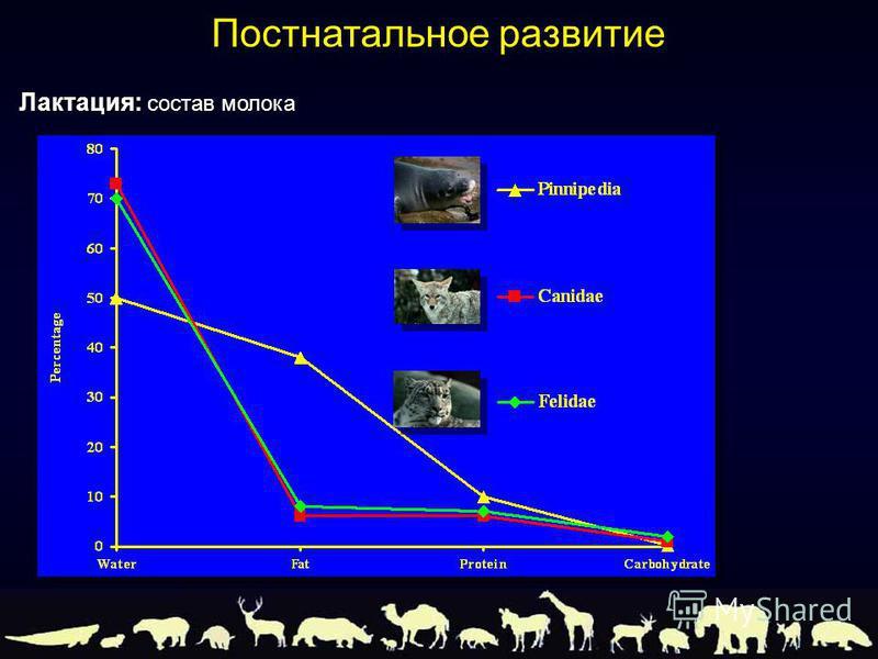 Лактация: состав молока Постнатальное развитие